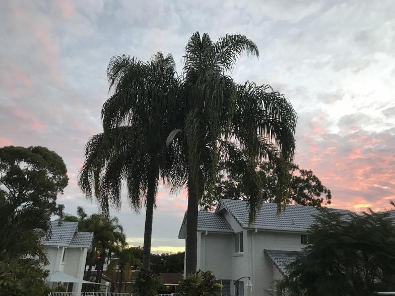 自宅の敷地内にはヤシの木も生えていて、夕焼け空もより一層きれいに