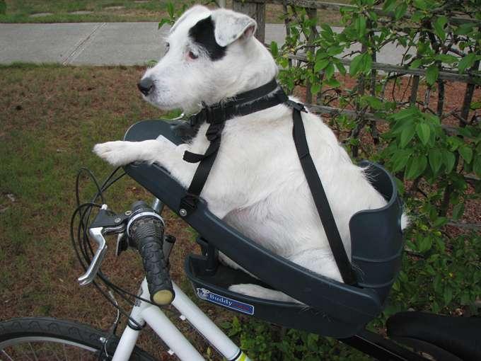 発・犬用としては初の自転車 ...