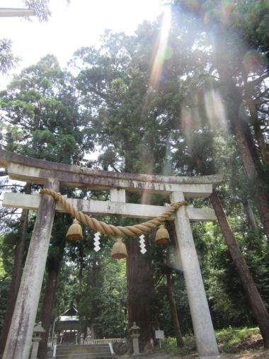 井上さんのガイドによると、旧街道には、古木が多いらしい。たしかに沢山ありました