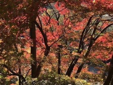 上野村の紅葉