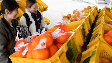地元市民でも知らない種類がたくさんの柑橘たち