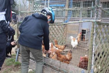 雨蛙菜園に立ち寄って、のびのびと育てられた鳥たちと交流。ここの鳥たちが産んだ新鮮な卵は卵好きの中でも評判だ