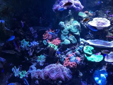 グレートバリアリーフのサンゴ礁など、クイーンズランド州ならではの展示も