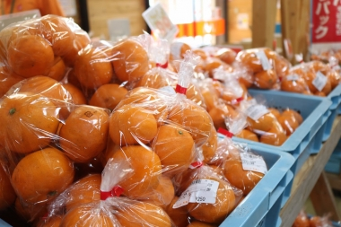 オレンジ一色に染まる「道の駅 風早の郷 風和里」