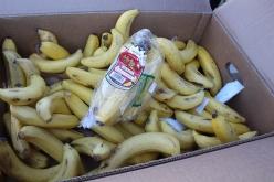 ライドのサポートとして「甘熟王」のバナナなどが参加者へふるまわれた
