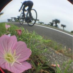 本誌編集長・江GO!作「こんなふうに寄って撮れば、見たことのない走りの写真も撮れる。走りに季節感を(笑)」