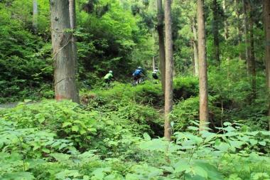 ロードバイクではとてもじゃないが味わえないような山道